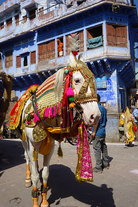 Parade, Jodhpur