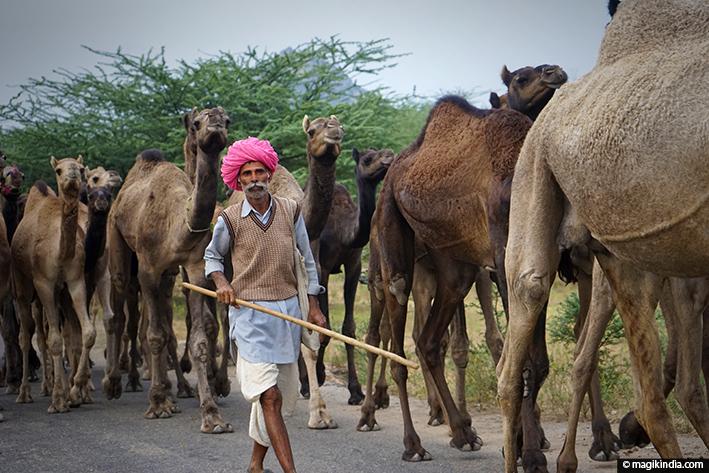 camel-fair-pushkar