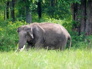 elephant-wayanad