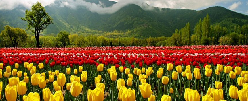 tulip_garden