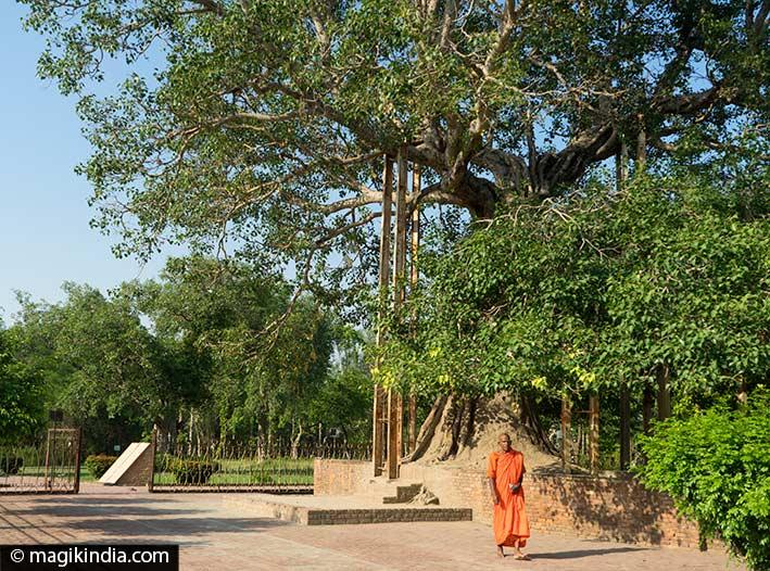 bouddha shravasti